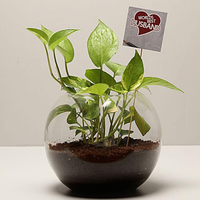 Money Plant For Best Husband: Terrariums Plants