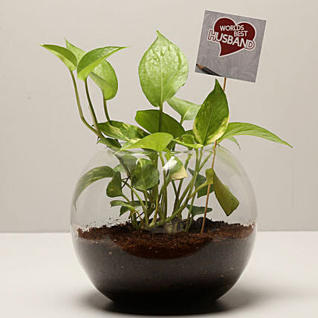 Money Plant For Best Husband: Plants for Husband