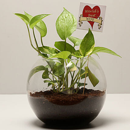 Money Plant For Best Wife: