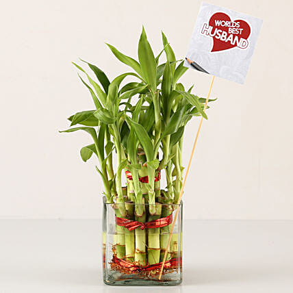 2 Layer Bamboo Plant For Best Husband: Karwa Chauth Plants
