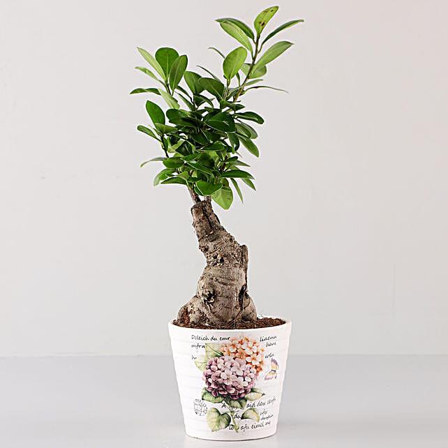 Ficus Bonsai In Lavender Découpage Planter: Rare Plant Gifts