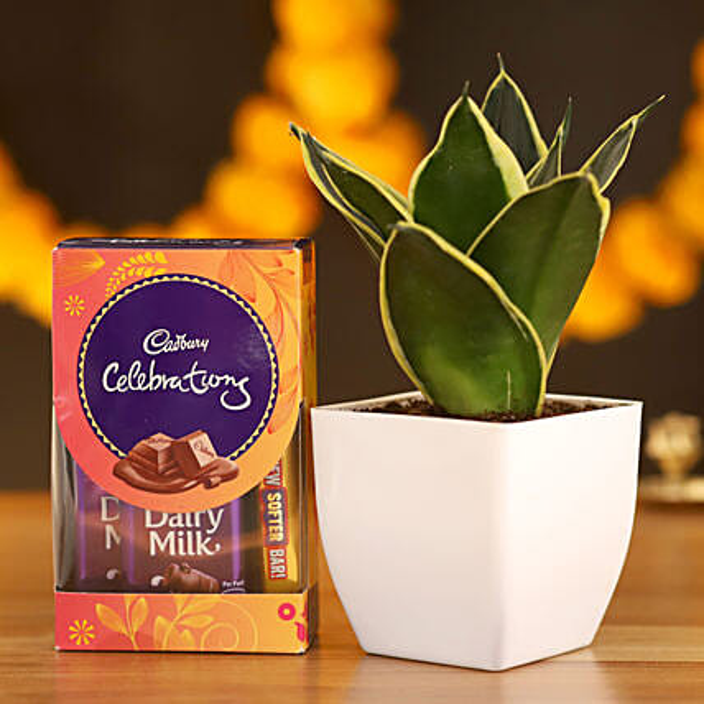 MILT Sansevieria & Cadbury Celebrations: Ornamental Plants