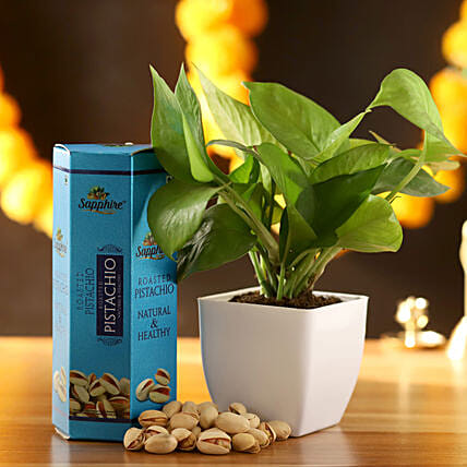 Money Plant With Pistachio: Ornamental Plant Gifts