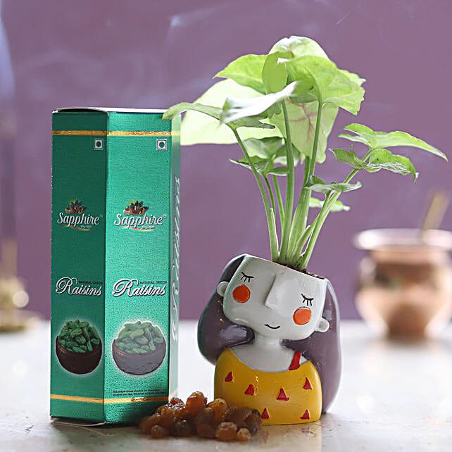 Raisins & Syngonium Plant Combo: Send Plants n Dry Fruits