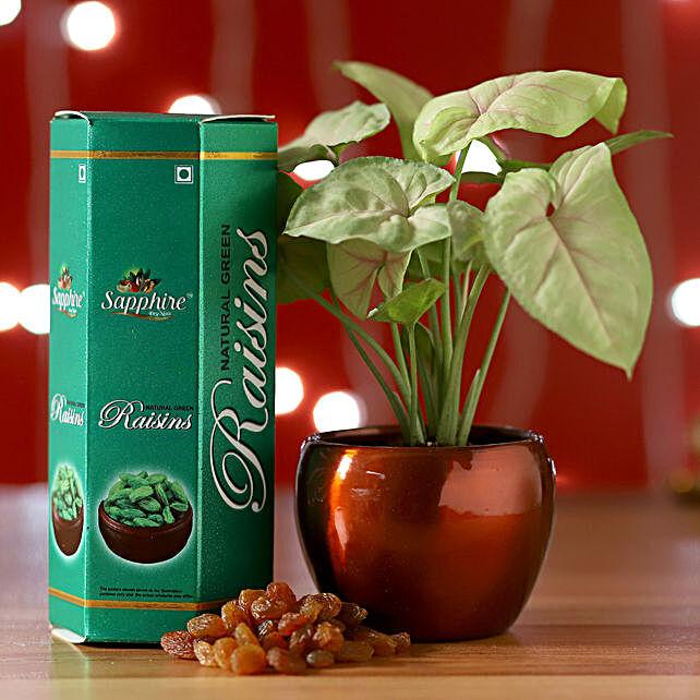 Syngonium Plant & Raisins Combo: