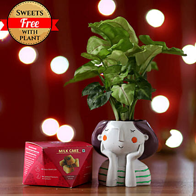 Syngonium Plant & Milk Cake Combo: Buy Sweets