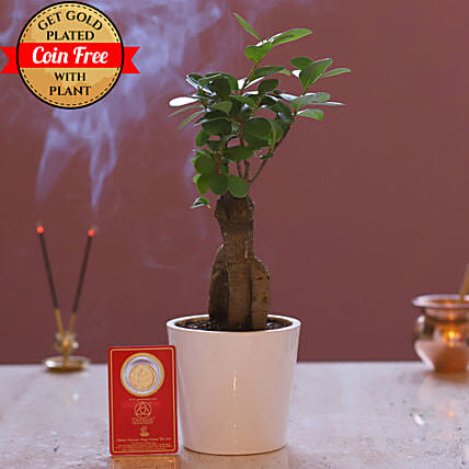 Free Gold Plated Coin With Ginseng Bonsai Plant: Bonsai Plants