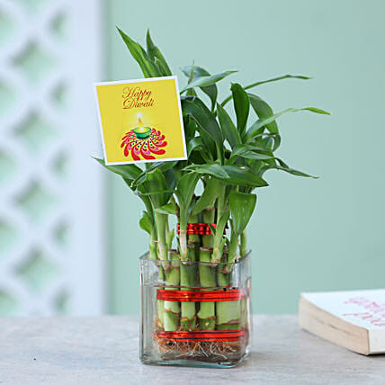 Two Layer Bamboo Plant For Diwali: Bamboo Plants