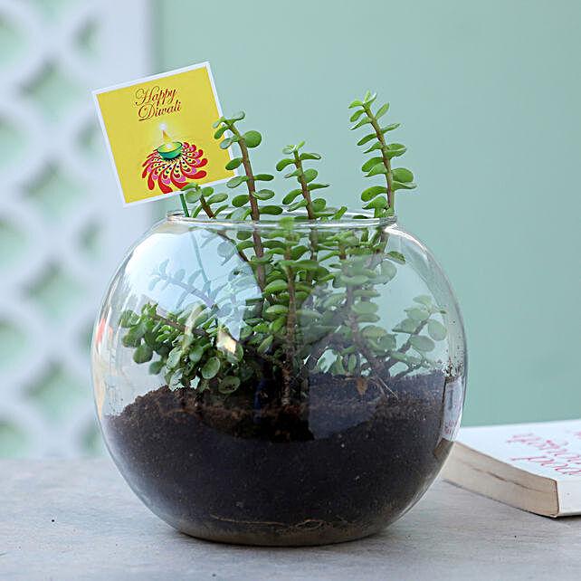 Jade Plant Terrarium For Diwali: 1000-cakes-vd