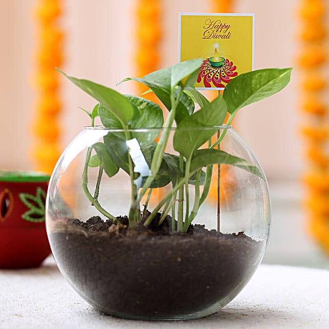 Money Plant Terrarium For Diwali: