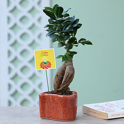 Ficus Ginseng Plant In Heart Shaped Pot: Rare Plant Gifts