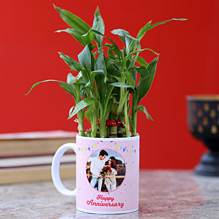 Personalised Anniversary Wishes Bamboo Plant: Plants for anniversary
