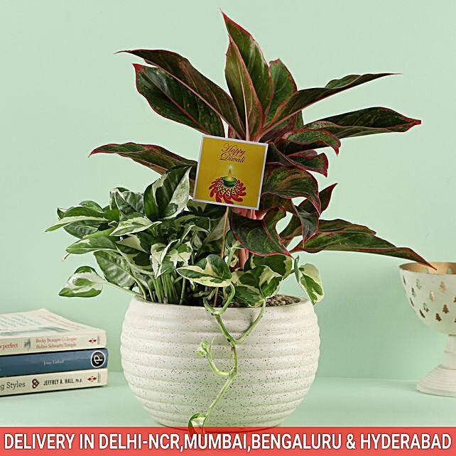 Nature's Symphony In Ceramic Caspian Bowl Pot: Dish Gardens