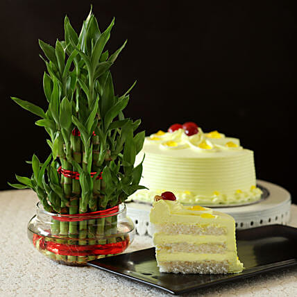 Butterscotch Cake With Three Layer Bamboo Plant: Boss Day Gifts