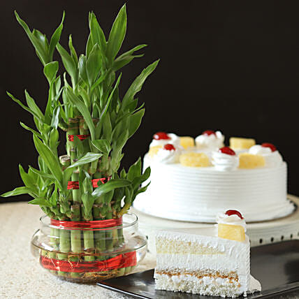 Pineapple Cake With Three Layer Bamboo Plant: Lucky Bamboo Plants