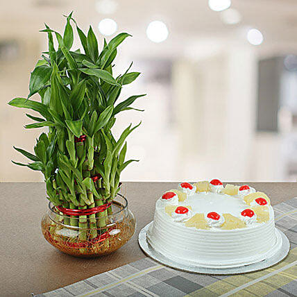 Pineapple Cake With Three Layer Bamboo Plant: Buy Christmas Combos
