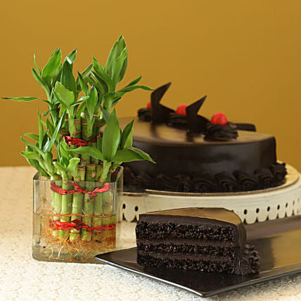 Truffle Cake N Two Layer Bamboo Plant: Plants for birthday
