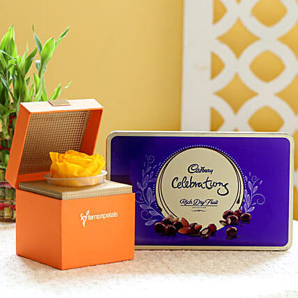Yellow Forever Rose & Cadbury Dry Fruit Collection: