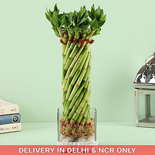 14 Lucky Bamboo Stalks Wheel In Square Vase: Good Luck Plants for Boss Day