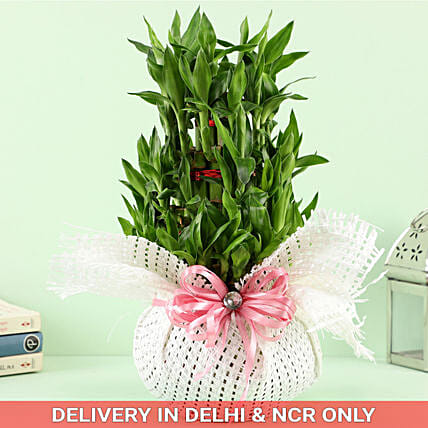 30 Bamboo Stalks Flower Cage In Fish Bowl: Good Luck Plants for Boss Day