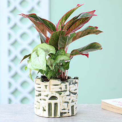 Air Purifying Foliage Combo: