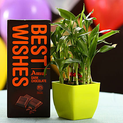Best Wishes With Lucky Bamboo & Chocolate: Send Gifts to Pilibhit