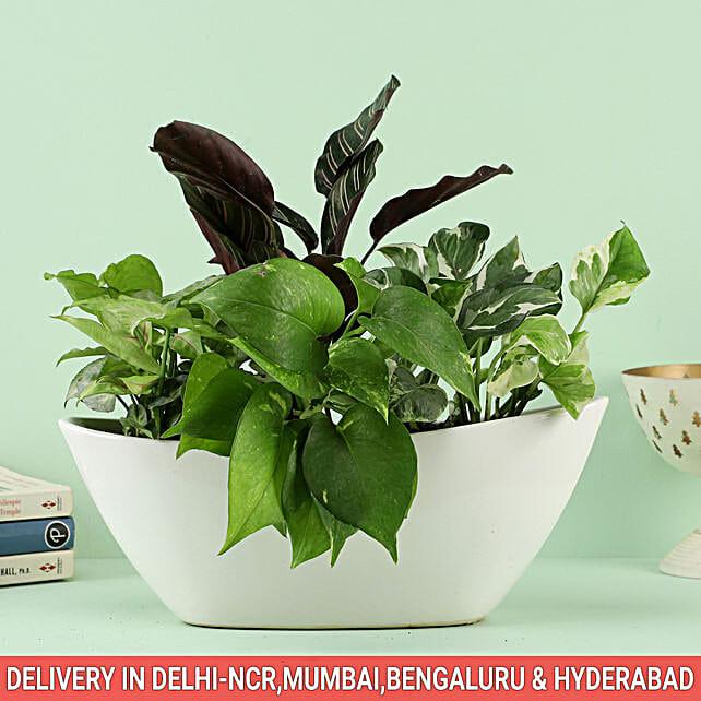 Glorious Gratitude Bouquet In Sydney Dish Pot: