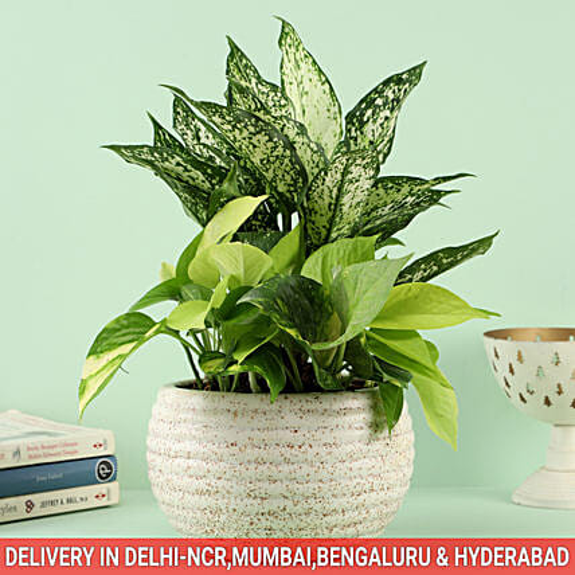 Midnight dream Bouquet In Ceramic Caspian Bowl Pot: