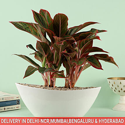 Regally Yours Bouquet In Sydney Dish Pot: Dish Gardens