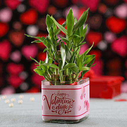 Valentine's Day 2 Layer Bamboo Plant: Gifts for Valentine's Week