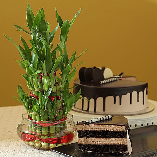 3 Layer Bamboo & Eggless Chocolate Cake: Buy Christmas Plants