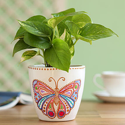 Money Plant in Hand Painted Butterfly Planter: