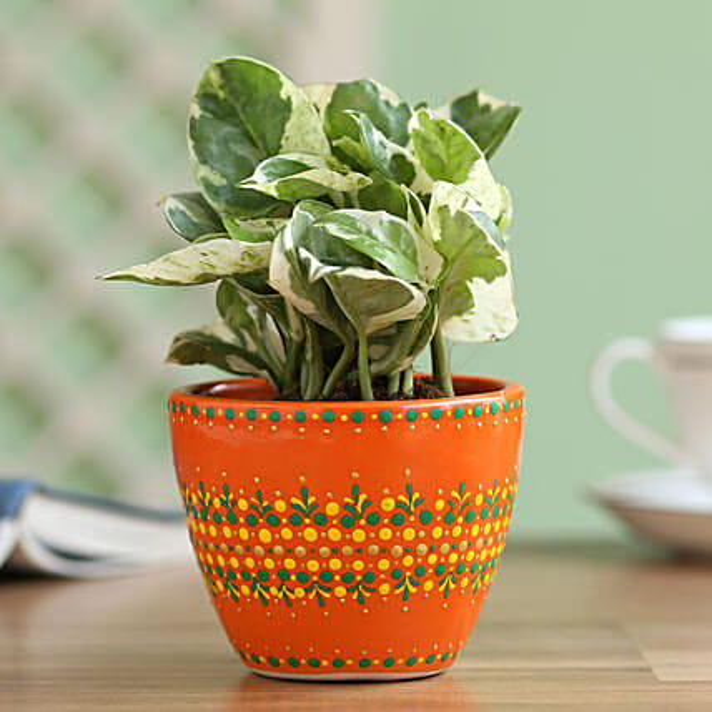 N'Joy Money Plant in Hand Painted Dot Planter: Indoor Plants