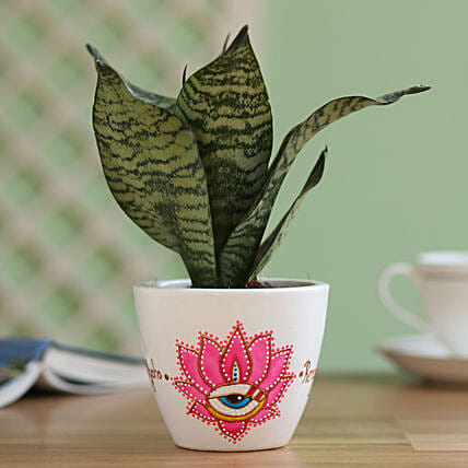 Sansevieria Plant in Hand Painted Planter: Boss Day Gifts
