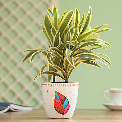 Song of India in Hand Painted Planter: Boss Day Gifts