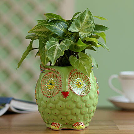 Syngonium Plant in Owl Hand Painted Planter: Gift Ideas