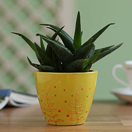 Aloe Gastro Plant in Hand Painted Planter: Gift For Boss