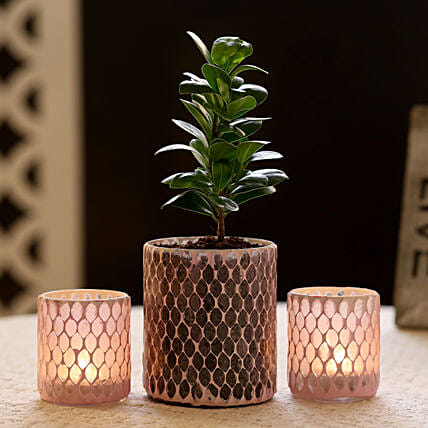 Ficus Compacta Plant In Mosaic Art Glass Pot & 2 Votive Holders: Best Gifts to India