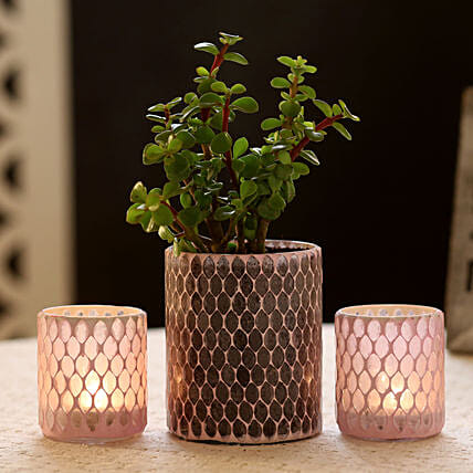 Jade Plant in Diamond Cut Mosaic Art Glass Pot & 2 Votive Holders: Best Gifts to India