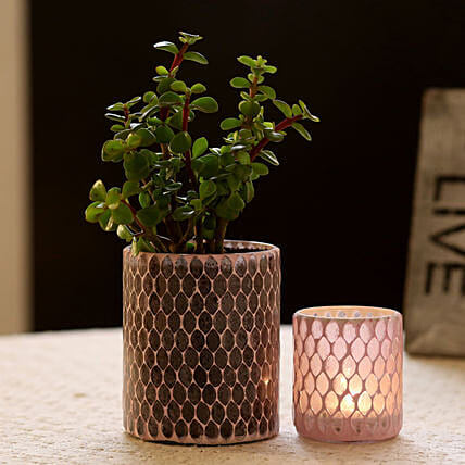 Jade Plant in Diamond Cut Mosaic Art Glass Pot & Votive Holder: Gift For Boss