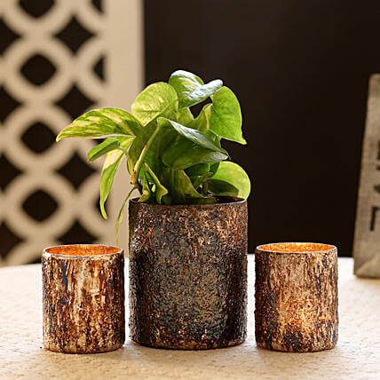 Money Plant In Glass Pot & 2 Votive Holders: Best Outdoor Plant