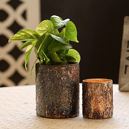 Money Plant in Metallic Finish Glass Pot & Votive Holder: Boss Day Gifts