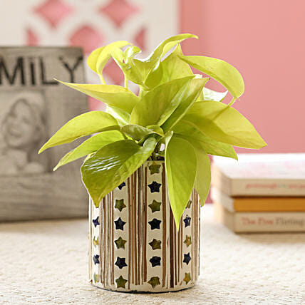Neon Money Plant In Star Mosaic Art Glass Pot: Send Gifts to Lakhimpur