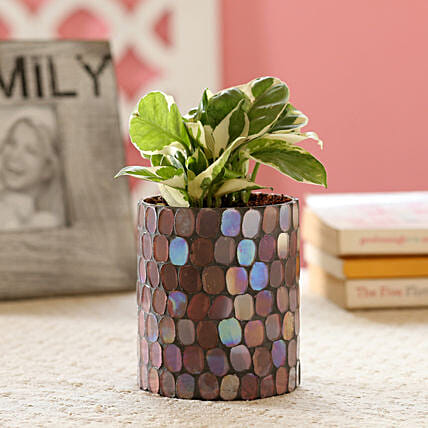N'Joy Money Plant In Mosaic Art Glass Pot: Gift For Boss