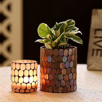 N'Joy Money Plant In Mosaic Art Pot & Votive Holder: Boss Day Gifts