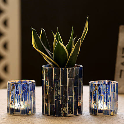 Sansevieria In Blue Mosaic Art Pot & 2 Votive Holders: Buy Indoor Plants