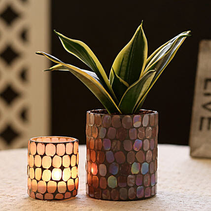 Sansevieria In Mosaic Art Pot & Votive Holder: Gifts to Barnala