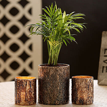 Chamaedorea Plant In Gold Glass Pot & 2 Votive Holders: Gifts to Barnala