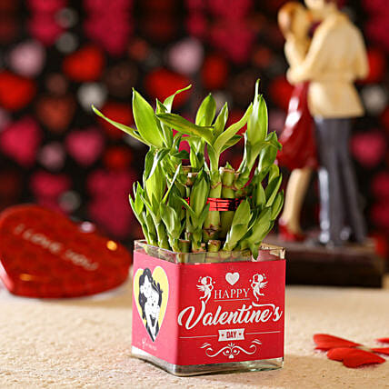 Valentine's Day Greetings Lucky Bamboo: Valentine Plants