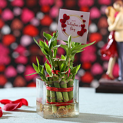 Valentine's Day Wishes Lucky Bamboo: Valentine Plants